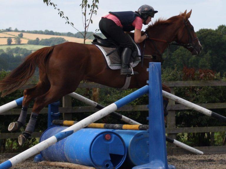 pre-training racehorses