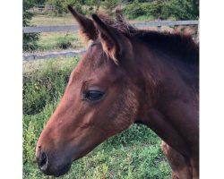 'Spice Boy' – Foal by Black Sam Bellamy