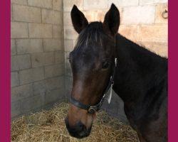 'Bally's Boy' – Foal by Ocovango