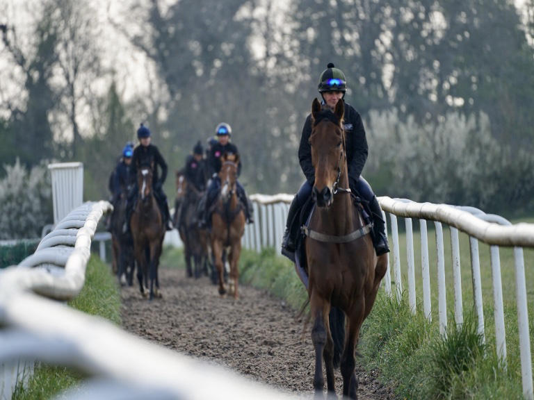 Happy horses looked after by a dedicated team