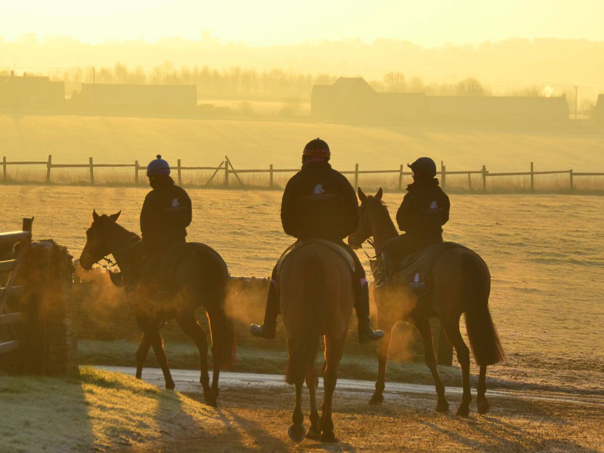 racehorses hacking out