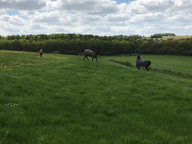 Racehorses enjoy grazing in paddocks at Martin Keighley Racing