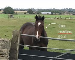 'Basil' – Yearling by Sans Frontieres (IRE)